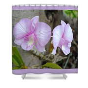 My Orchid # 15 Shower Curtain