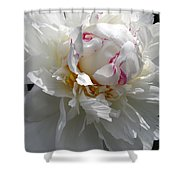 My Peony Shower Curtain