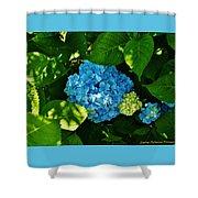 My Pride And Joy Hydrangea Shower Curtain