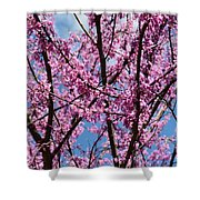 My Redbuds In Bloom Shower Curtain