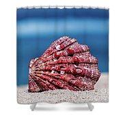 My Shell Shower Curtain