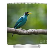 My Song To You.. Shower Curtain