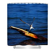 My Tern To Perch Shower Curtain