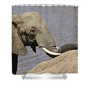 My Trunk Needs Drying Out Shower Curtain