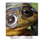 My What Big Eyes You Have Shower Curtain