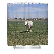 My White Knight Shower Curtain