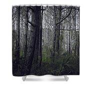 Myakka Woods Shower Curtain
