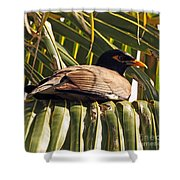 Myna In The Palms Shower Curtain