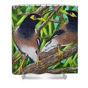 Mynah Birds #474 Shower Curtain