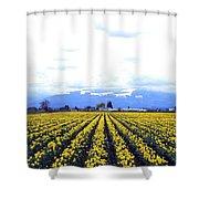 Myriads Of Daffodils Shower Curtain