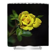 Mystic Yellow Rose Shower Curtain