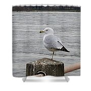 N Y C Water Gull Shower Curtain