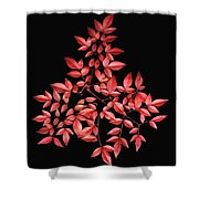 Nadina Branch Shower Curtain