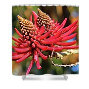 Naked Coral Tree Flower Shower Curtain by Mariola Bitner