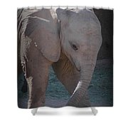 Nandi Shower Curtain