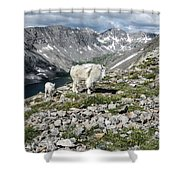 Nanny And Kid Goat #2 Shower Curtain