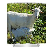 Nanny And Kid Goat Shower Curtain