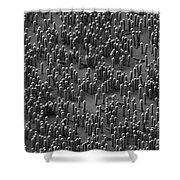 Nanowire Lithium-ion Batteries, Sem Shower Curtain