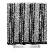Nanowires, Nanowalls, Sem Shower Curtain