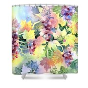 Napa Valley Morning 2 Shower Curtain by Deborah Ronglien