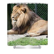 Nappin' Lion Shower Curtain