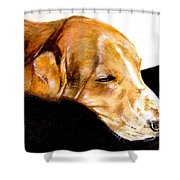 Napping Nadine Shower Curtain