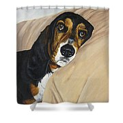 Naptime - Bassett Shower Curtain