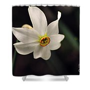 Narciso Shower Curtain