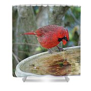 Narcissist Cardinal Shower Curtain