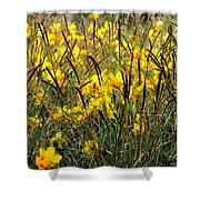 Narcissus And Grasses Shower Curtain