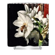 Narcissus And The Bee 1 Shower Curtain by Daniele Smith
