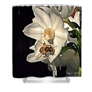 Narcissus And The Bee 2 Shower Curtain by Daniele Smith