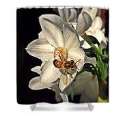Narcissus And The Bee 3 Shower Curtain