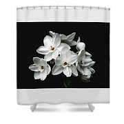 Narcissus The Breath Of Spring Shower Curtain