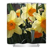 Narcissus Fortissimo Shower Curtain