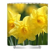 Narcissus Meadows Shower Curtain