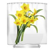 Narcissus (n. Tazetta) Shower Curtain