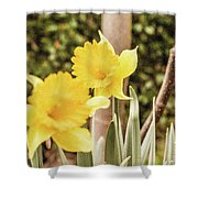 Narcissus Of A Plant Shower Curtain