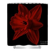 Narcissus Red Flower Square Shower Curtain