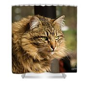 Nari A Maine Coon Cat Shower Curtain