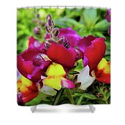 Nascent Blossoms  Shower Curtain