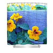Nasturtium Box Shower Curtain