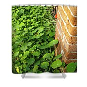 Nasturtium Leaves Shower Curtain