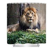National Zoo - Luke - African Lion Shower Curtain