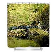 Native Evergladien Shower Curtain