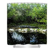 Native Floridian Shower Curtain