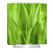 Native Prairie Grasses Shower Curtain