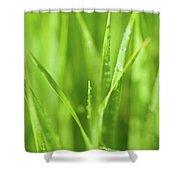 Native Prairie Grasses Shower Curtain by Steve Gadomski