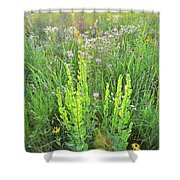 Native Prairie In Moraine Hills State Park Shower Curtain