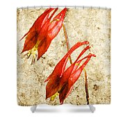 Native Virginia Columbine Shower Curtain